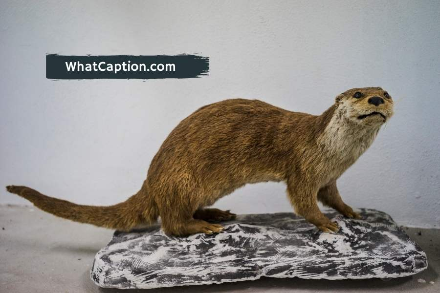 Taxidermy Captions for Instagram